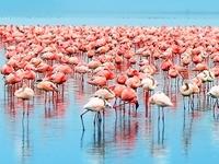 Safari Raha Kenya 4 days