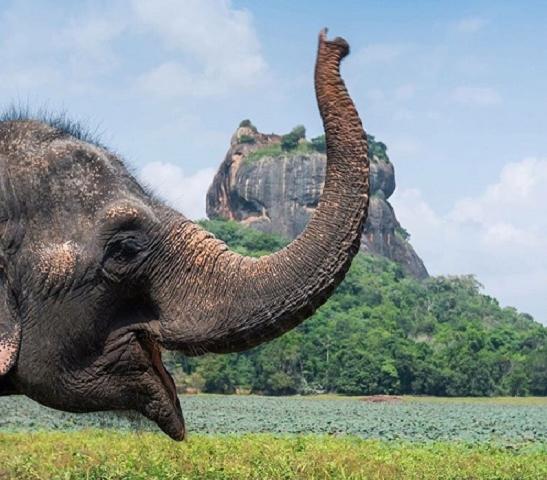 Discover Lanka Photos