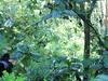Silverback & Bwindi Forest UG