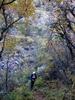 Silver Peak Trail