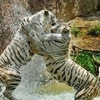 Similipal Eco Tourism Similipal Tiger Reserve 4