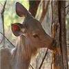 Singhori Wildlife Sanctuary