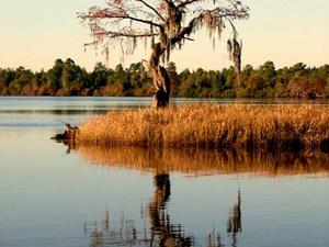 Singletary Lake