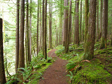 Siouxon Creek Trail - Gifford Pinchot National Forest