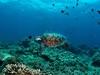 Sipadan Island - Green Turtle - Sabah