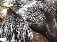 Shivaram Wildlife Sanctuary