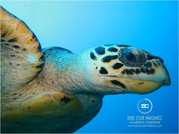 3 Night With 6 Dives In Hulhumale Maldives Photos