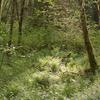 Six Foot Track to Te Motiwha Saddle & Makomako Hut