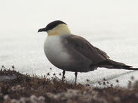 Skorpa Bird Sanctuary