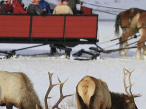Yellowstone Winter Wonderland Special Fotos