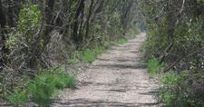Snake Bight Trail