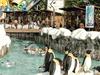 SnowBay Water Park TMII