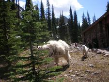 Snyder Lake Trailviews - Glacier - Montana - USA