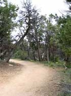 Soda Canyon Overlook Trail