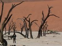 Desert Bush And Beach