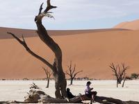 Namibia Special Getaway Safari