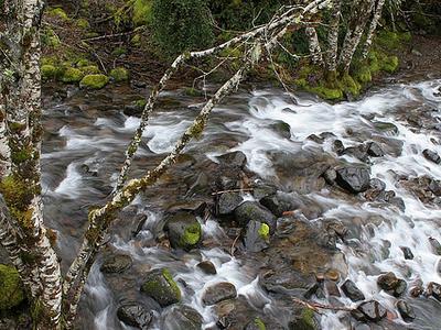 South Fork Breitenbush River