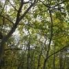 South Saint Vrain Trail