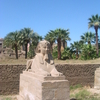 A Well Preserved Sphinx