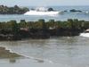 Spring  Lake Seagulls