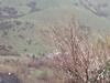 Springvil Mtns