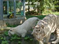 Sóstó Zoo