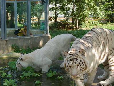 Sóstó Zoo,Nyíregyháza