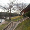 Stairs Leading To Barton Springs Pool