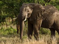 Standard Wildlife Safari