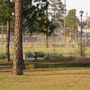 Statesboro Georgia Downtown Ball Fields