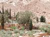 St. Catherine Monastery Olive Garden - Egypt Sinai