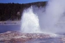 Steady Geyser - Yellowstone - USA