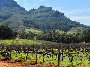 Stellenbosch Wine Tour From Cape Town Photos