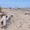 Stonefield Beach State Recreation Site