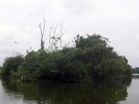 Cegonha Ilha