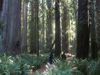 Trail Grove Stout