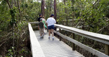 Strolling Along The Mahogany Hammock Trail