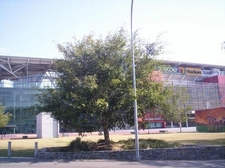 Suncorp Stadium Entrance And Tree