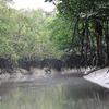 Sundarbans Landscape