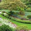 Sunken Garden At Butchart Gardens In Victoria BC