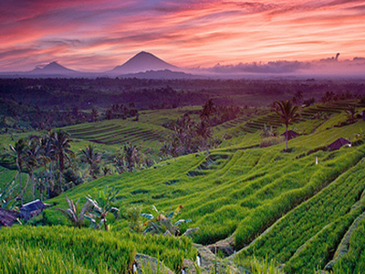 Sunset At Jatiluwih Rice Fields