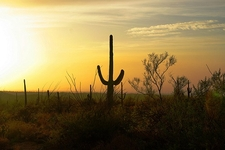 Sunset At Saguaro NP - Tucson AZ