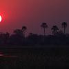 Sunset Okavango Delta