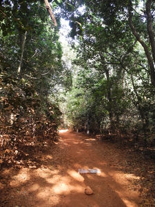 Sunset Point Jungle Trail - Matheran - Maharashtra - India