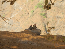 Sunset Point Monkey Pair - Matheran - Maharashtra - India