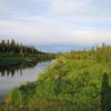 Swanson Río