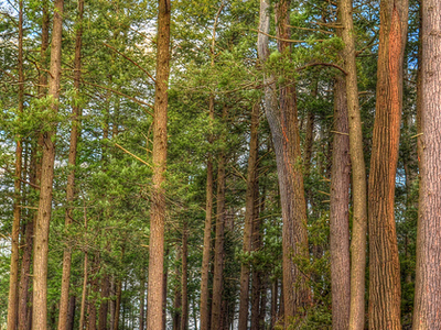 Swartswood State Park