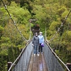 Swingbridge @ Hokitika Gorge NZ South Island