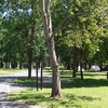 Sycamore Grove Picnic