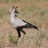 Secretary Bird In Kamuku National Park
